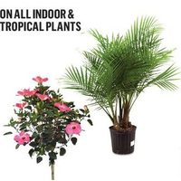All Indoor & Tropical Plants